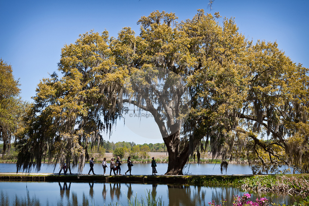 Tour group passes a live oak tree at Middleton Place Plantation in Charleston, SC. Middleton Place Garden is the oldest formal garden in the United States, dating back to around 1741.
