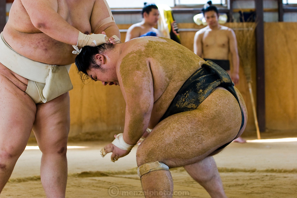 Masato Takeuchi (at left, his ring name is Miyabiyama), a sumo wrestler at the junior champion level (sekiwale)  touches an opponent who he has thrown to the ground during practice for a tournament in Nagoya, Japan. (Masato Tekeuchi is featured in the book What I Eat: Around the World in 80 Diets.)  Miyabiyama is one of the largest of the Japanese sumos and would probably have moved up even further in the ranks had he not suffered a severe shoulder injury. He is only just now returning to matches. MODEL RELEASED.