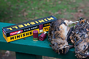 Aguila Ammunition Minishells and three Ameerican Woodcock