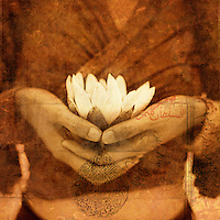 A woman's hands holding a white lotus blossom. <br /> <br /> ~Dhyāna (Sanskrit; Devanagari: ध्यान) or Jhāna (झान) (Pāli) in Hinduism, Buddhism, Jainism [note 1] means meditation which is &quot;a deeper awareness of oneness which is inclusive of perception of body, mind, senses and surroundings, yet remaining unidentified with it&quot;.[2] Dhyana is taken up after preceding exercises,[1] and leads to samadhi and self-knowledge, separating māyā from reality to help attain the ultimate goal of mokṣa. (Wikipedia)