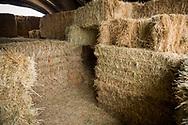 Labyrint i h&ouml; f&ouml;r de yngsta bes&ouml;karna hos Bauman Farms, Gervais, Oregon, USA<br /> Foto: Christina Sj&ouml;gren