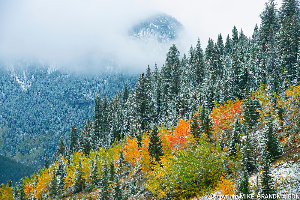 Snowfall and autumn colors  in the Canadian Rockies<br />Kananaskis Country<br />Alberta<br />Canada