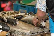 Fish monger, Belleville market