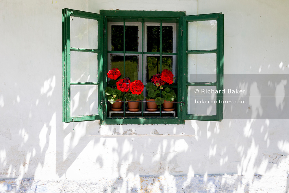 Red Gernaiums growing in flower pots on a rural Slovenian village window sill, on 18th June 2018, in Kupljenik, Slovenia
