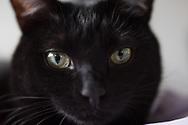 Pet photography, black cat, kitty, animal portrait, cute cat photo. Santa Monica photographer, pet photo session, cat photo shoot, Los Angeles, West LA, California.