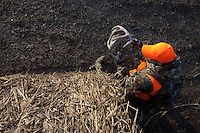 DEER HUNTER WITH A MOSSBERG SHOTGUN AND WEARING BLAZE ORANGE AND REALTREE CAMOUFLAGE HIDING BEHIND HAY BALES USING ANTLERS TO RATTLE DEER