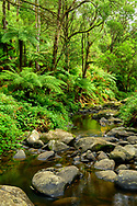 Oceania; Australia; Australian; Down Under; Victoria; Great Otway National Park,  Creek at Stevensons Falls