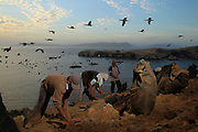 Workers scrap stones to collect bird dung on the Ballestas island, south of Lima, October 8, 2011. Ballestas, as with other 21 islands along the Peruvian coast, are home of nearly 4 million migratory birds as guanays, boobies and pelicans which excrement make up the world's finest natural fertilizer. The bird dung, also known as guano, reached its greatest economic importance in the 19th century as a coveted resource, being exported to United States, England and France. Now, Peru hopes to benefit mostly small farmers with an annual production of 20 thousand tons, destined to boost organic agriculture, according to Agrorural, the Rural Agrarian Productive Development Program.