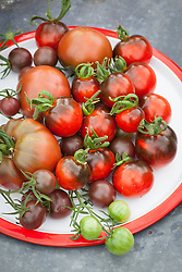 Superfood tomato collection. Tomato 'Noire de Crimee', 'Indigo' and 'Chocolate Cherry'