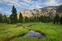 Purcell Mountains meadow, Bugaboo Provincial Park British Columbia