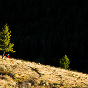 Andrew Whiteford grabs one last ride before winter sets in. Singletrack above Jackson, Wyoming.