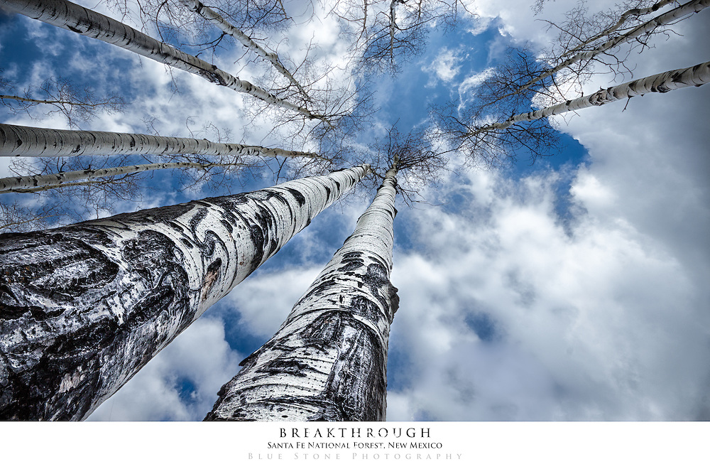 20x30 poster print of aspens and sky with clouds.