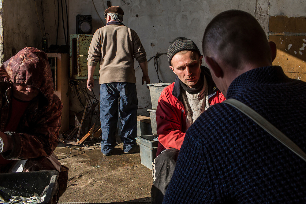 Fishermen package their catch for market on Saturday, April 11, 2015 in Siedove, Ukraine.