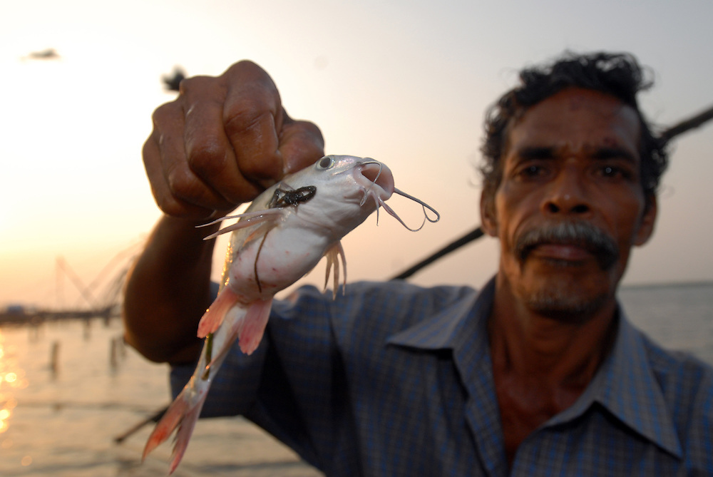 Catfish caught by Chinese fishing nets in Fort Cochin, Kerala, India