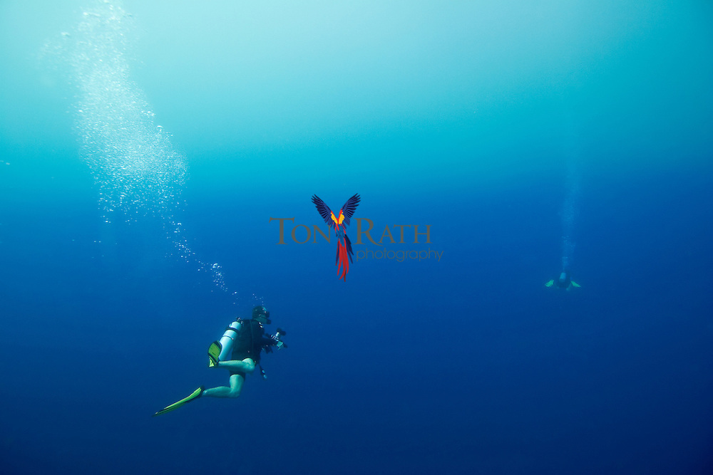 Horizontal shot of an underwater photographer and his model diving the Gladden Spit & Silk Cayes Marine Reserve off the coast of Placencia, Stann Creek, Belize.