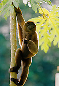 AMAZON - WILDLIFE - MAMMALS/BIRDS