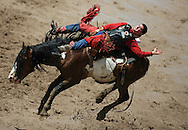 Bareback Rider Justin McDaniel scores an 85 riding 050 Painted Valley HV, Championship Sunday, 29 July 2007, Cheyenne Frontier Days