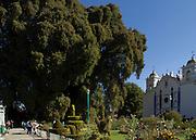 El árbol del Tule es un ahuehuete o sabino de más de cuarenta metros de diámetro, está en el atrio de la iglesia de Santa María del Tule, a veinte minutos de la ciudad de Oaxaca. Mide cuarenta metros de alto y pesa 636 toneladas.