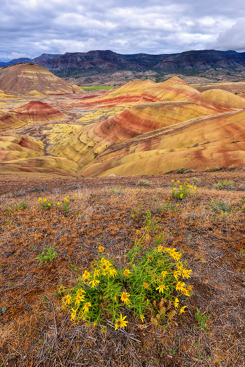 Sunflowers and eroded badlands in the Painted Hills area of the John Day Fossil Beds National Monument, Oregon.