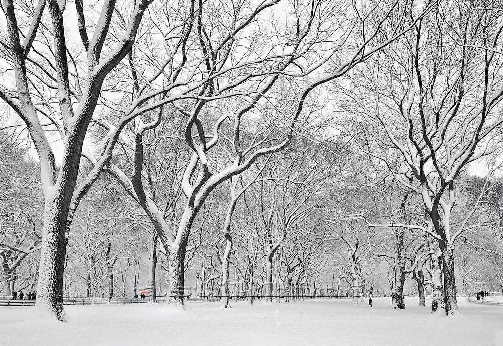 Winter in Central Park, Manhattan