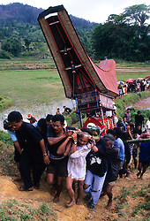 Indoneisa, Sulawesi, Tana Toraja Region. Coffin carried to grave in Lakkalan amid rice fields during elaborate 3-day funeral.