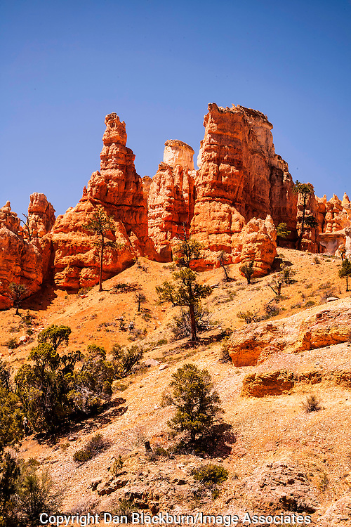 Red Rock Formations Rise Above Mossy Cave Trail in Bryce Canyon National Park