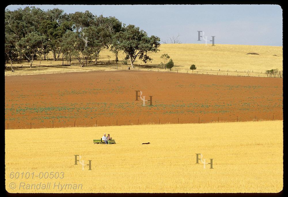 Farmer drives all-terrain vehicle amid golden fields of stubble & red fallow land; Coolamon, NSW Australia