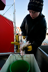 NORWAY LOFOTEN 27MAR07 - Young Norwegian boy cuts out cod's tongues, a local delicary in Henningsvaer port on the Lofoten islands...jre/Photo by Jiri Rezac..© Jiri Rezac 2007..Contact: +44 (0) 7050 110 417.Mobile:  +44 (0) 7801 337 683.Office:  +44 (0) 20 8968 9635..Email:   jiri@jirirezac.com.Web:    www.jirirezac.com..© All images Jiri Rezac 2007 - All rights reserved.