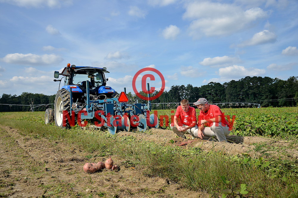CALS students check on a sweet potato field in Lenoir County.