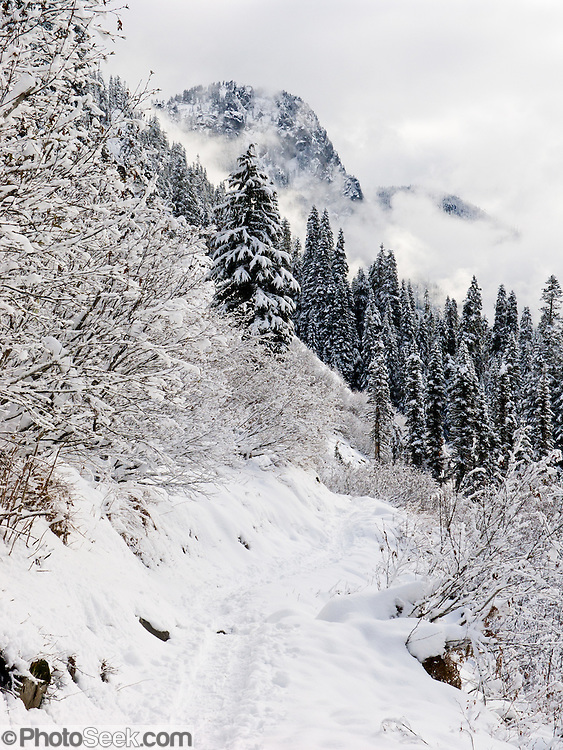 Snow Lake trail is a snowshoe path in early December at Snoqualmie Pass, Washington, USA