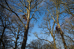 Harefield, UK. 18 January, 2020. Earth protectors climb trees after activists from Extinction Rebellion, Stop HS2 and Save the Colne Valley reoccupied the Colne Valley wildlife protection camp on the second day of a three-day 'Stand for the Trees' protest in the Colne Valley timed to coincide with tree felling work by HS2. Bailiffs acting for HS2 had evicted all but two activists from the camp the previous week. 108 ancient woodlands are set to be destroyed by the high-speed rail link.