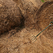 Pittsboro, NC - May 13: A pitchfork in hay bales at the farm at Circle Acres. (Photo by Logan Mock-Bunting)