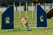 Southland Dog Training Club photos of agility training, Invercargill, New Zealand