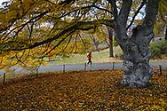 Central Park Nov. 27, 2016.