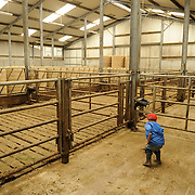Adam Doran, the three year old and eldest son of farmer Enda Doran, works in the cattle shed at their farmer in Ballinasloe, Co. Galway...Mr. Doran is the eldest of 3 brothers and sisters and by tradition the heritor of the family farming land and business. His farming activities involve cereal and potato production, cattle and sheep breathing and contract work for other farmers.