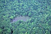 Carolina Bay, vernal pool, DE, Blackbird State Forest
