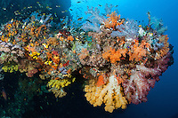 Rainbow of Soft Corals and Damsels<br /> <br /> Shot in Indonesia