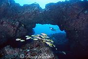 diver encounters a school of ta'ape ( bluestripe snapper ), Lutjanus kasmira, The Caverns, or Sheraton Caverns, Poipu, Kauai, Hawaii, USA  ( Pacific ) MR 290
