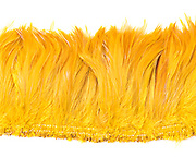 Schuman Feathers, the best feather supply! We sell high-quality feathers at great prices [retail and wholesale]. Consider Schuman Feathers - for all of your feather needs. We're the best! http://www.schumanfeathers.com/