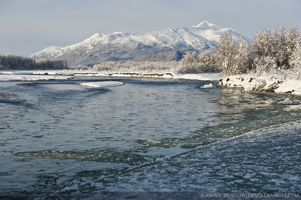 Ice slowly begins to form on the Chilkat River in the Alaska Chilkat Bald Eagle Preserve near Haines, Alaska. During November and December several thousand bald eagles come to the alluvial delta area at the confluence of the Tsirku and Chilkat Rivers because of the availability of spawned-out salmon and open waters. The open water is due to a deep accumulation of gravel and sand that acts as a large water reservoir whose water temperature remains 10 to 20 degrees warmer than the surrounding water temperature. This warmer water seeps into the Chilkat River, keeping a five mile stretch of the river from freezing as quickly as other rivers in the area. The 48,000 acre area was designated as the Alaska Chilkat Bald Eagle Preserve in 1982. The mountain the background is Four Winds Mountain. Mountains in the Haines area are a popular destination for heli-skiing.
