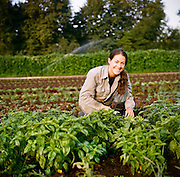 Nancy harvests basil at Persephone Farm, an organic vegetable farm in Lebanon, Oregon.