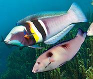 New Zealand species underwater