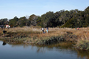 Intro to Marine Science students gather marine plants to be kept in a microcosm in a wet lab along a marsh at Savannah State University, an historically black university in Savannah, Georgia February 9, 2009. KENDRICK BRINSON