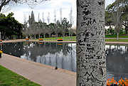 One of the poplars flanking the Lake of Reflections at the ANZAC War Memorial in Hyde Park, Sydney. The poplars, not native to Australia, were planted to represent the far-away fields of France where Australian troops fought and died in World War I. Hyde Park, Sydney, Australia