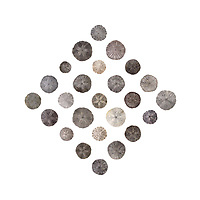 Twenty-five sand dollars (Echinarachnius parma) found on the beach at Seal Harbor, Maine