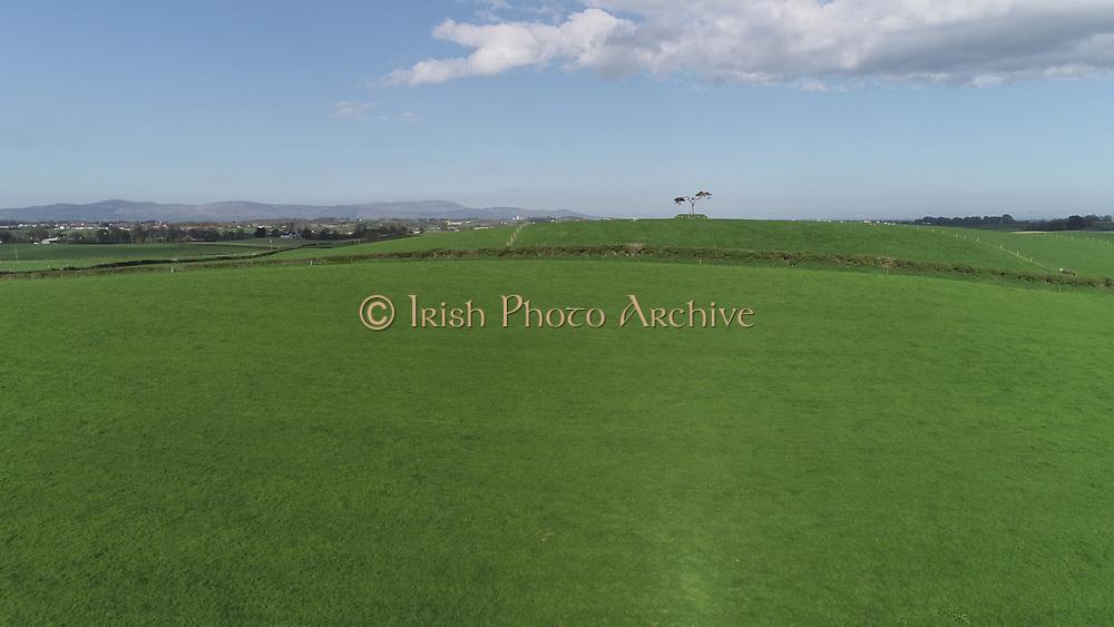 lone, bush, county, louth, sheep, field, lone, bush, county, louth, sheep, field, aerial photos