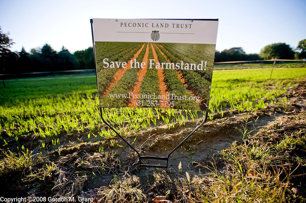 """Sagaponack, NY - 10/10/08 -""""Save The Farmstand"""" sign at Pikes Farmstand in Sagaponack, NY October 10, 2008.  (Photo by Gordon M. Grant)"""