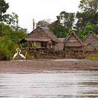 "The Amazon rainforest has been home to humans for at least 11,200 years.  The typical home on the Amazon river is called a ""palafito"" which is a home built on stilts to prevent flooding when the water level of the river rises."
