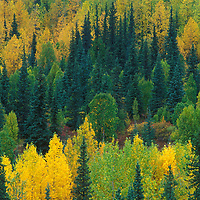 View of fall color from the park road near the park entrance Danali National Park Alaska.