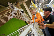 Oct 14, 2008 -- PHOENIX, AZ: A man holds his daughter while she feeds a baby giraffe in the petting zoo at the Arizona State Fair Tuesday. The Arizona State Fair started Oct.  10 and runs through Nov. 2. Carnival and midway workers who have worked the fair for years say attendance so far is much lower than in the past and people at the fair this year aren't spending as much money as they have in the past. Photo by Jack Kurtz / ZUMA Press
